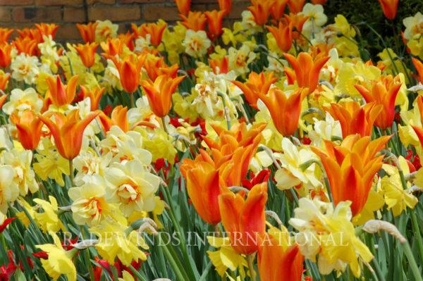 flower bulbs