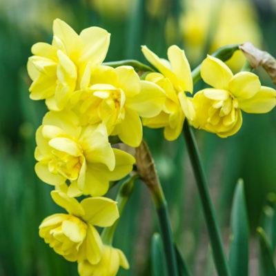 N_yellow_cheerfulness_wm