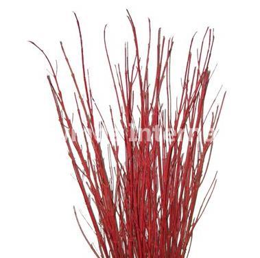 cardinal_red_dogwood_2