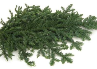 noble-fir-bough