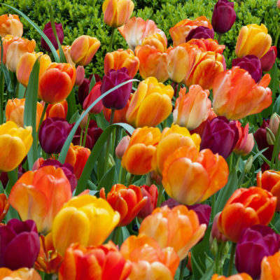 View our bulb selection