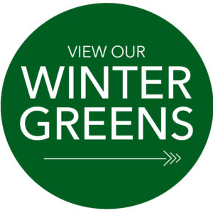 Winter Greens & Decorations