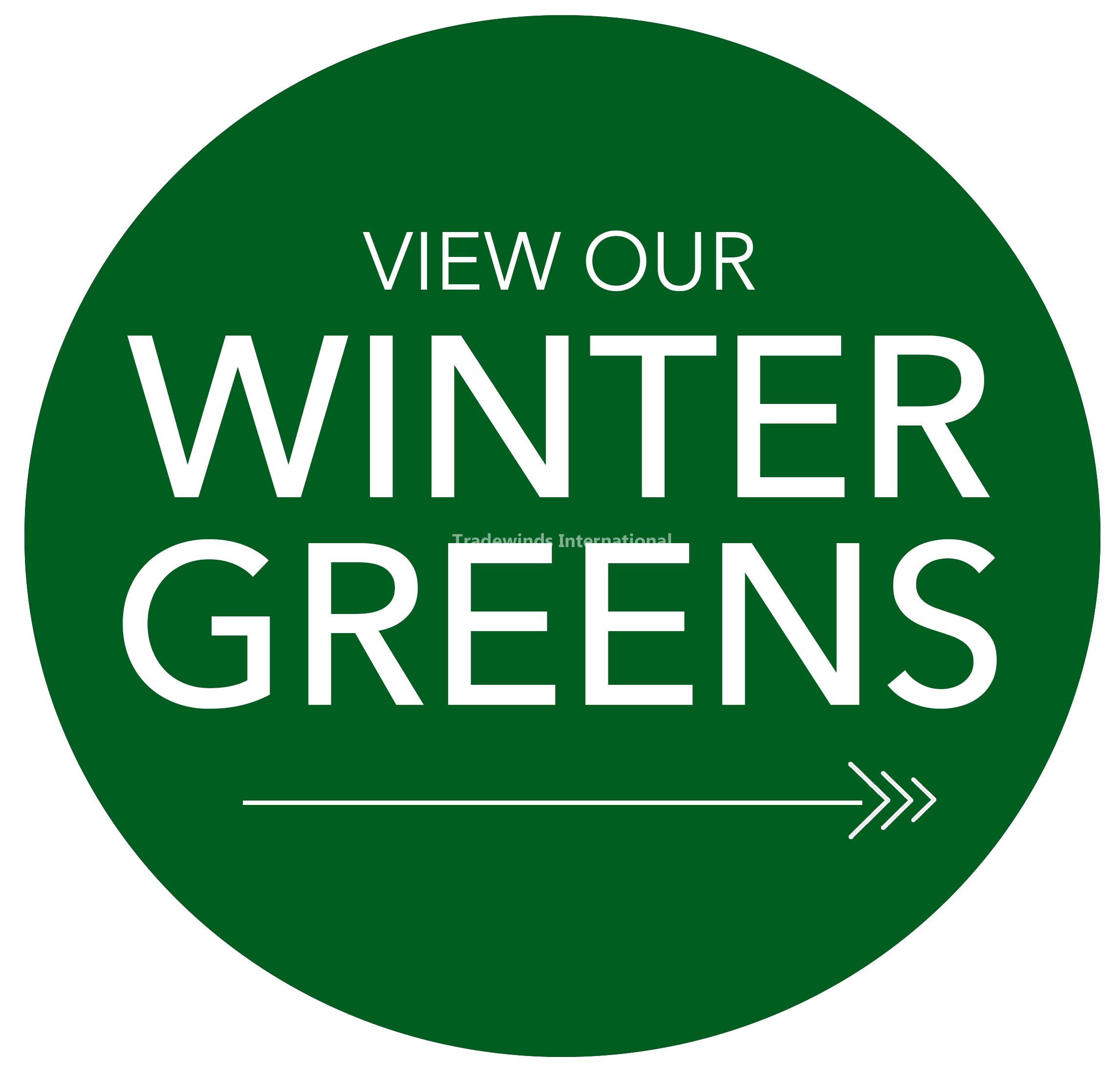 Winter Greens & Decorations
