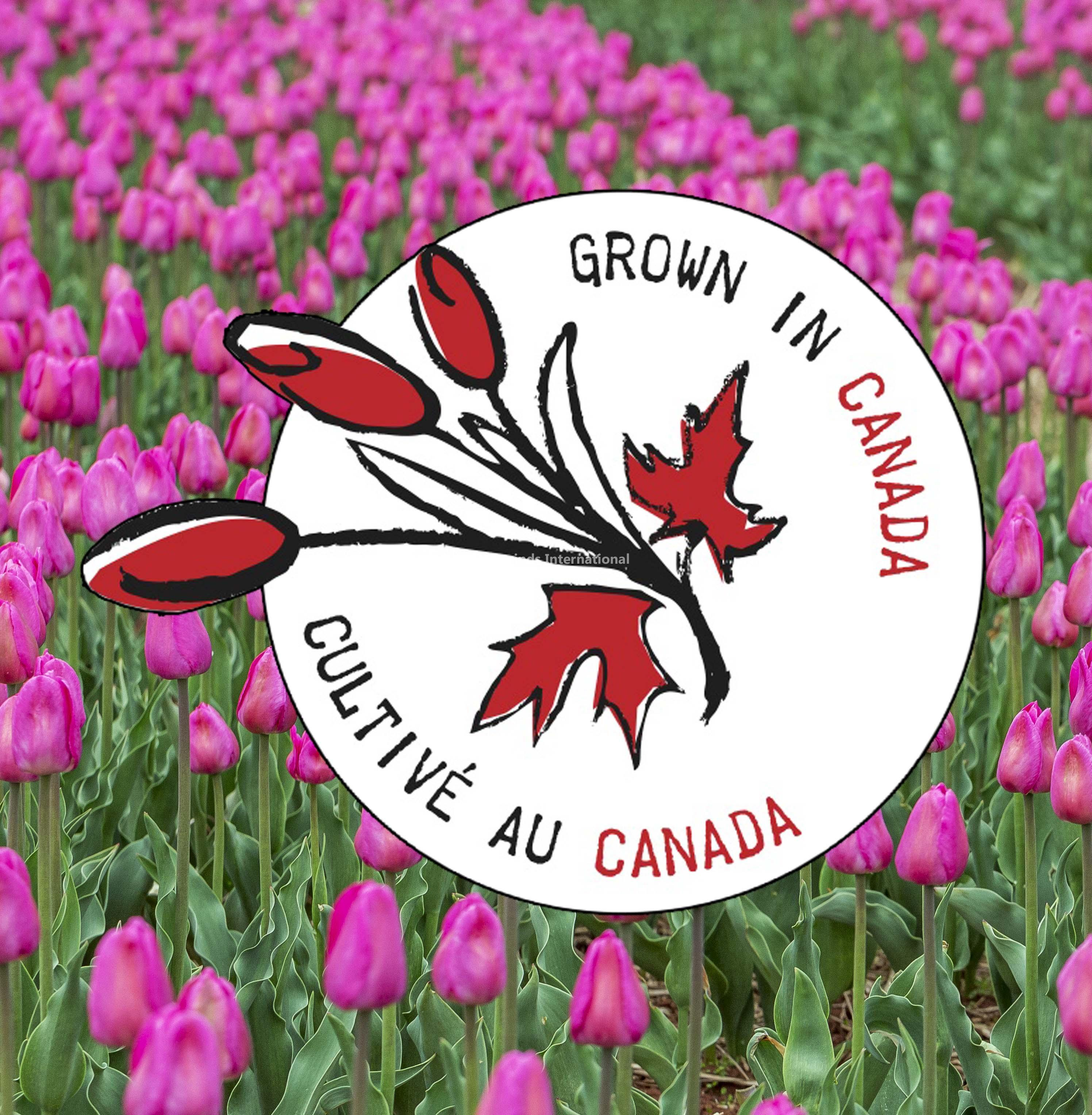 Grown in Canada