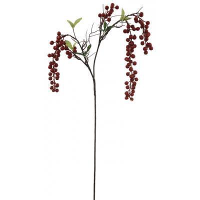 cascadeberryclusterbranch43