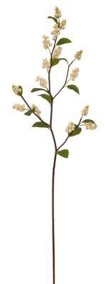snowberrybranchwhite