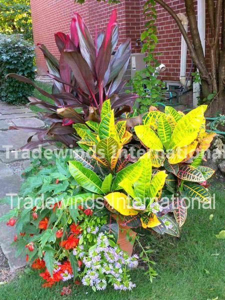 summer tropicals, plants, tropical